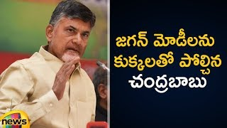 Chandrababu Naidu Slams PM Modi and YS Jagan | AP Political Updates |AP CM Chandababu Latest Speech - MANGONEWS