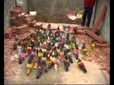 Dişi Kuşu Kümesine Getirmek İçin Yüzlerce Kuşların Yarıştığı Pika Güvercinleri