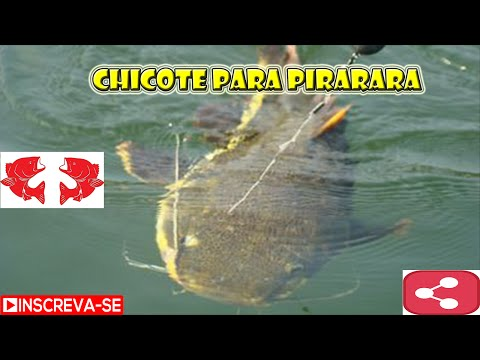 Chicote para Pirarara [Dicas e Pescas]
