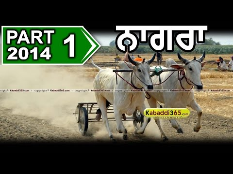 Part 1 Nagra (Ludhiana) Ox Race 11 May 2014 By Kabaddi365.com