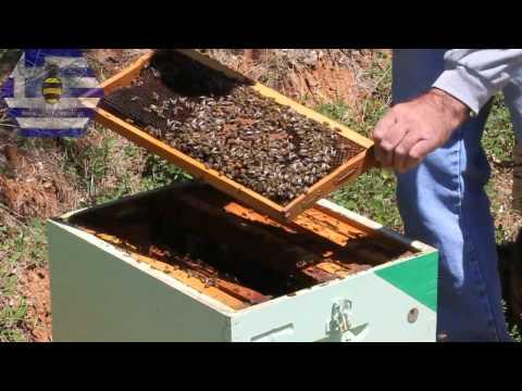 Επιθεώρηση μελισσιού - Απρίλιος 2011