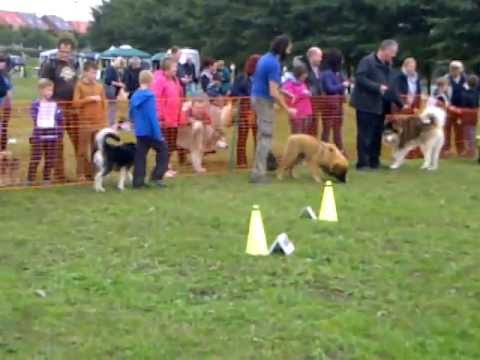 Puppy Class at The Amcuk Fun Dog Show
