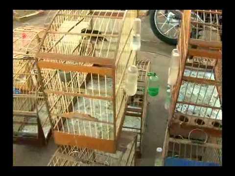 Dezenas de pássaros silvestres são apreendidos em Dobrada