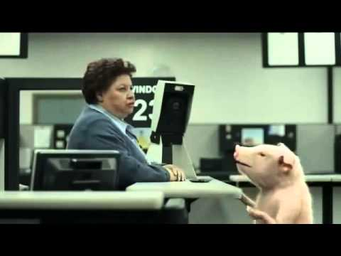 GEICO Commercial - DMV Pig's Identification Photo - AdsYo!