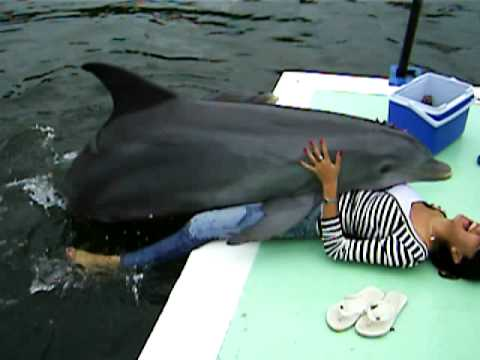 Sex woman dolphin having with
