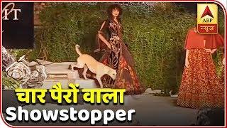 When stray dog made entry during Sidharth Malhotra's ramp walk - ABPNEWSTV