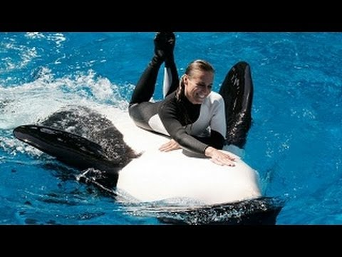 """SeaWorld's old Shamu """"Believe"""" Show (With Trainers in the Water!!!) -Uh5Eigt_dhQ"""