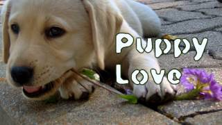 Royalty Free :Puppy Love
