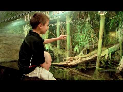 A Day at Shedd Aquarium
