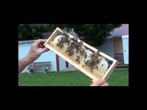 Beekeeping - How Adding Wax Can Improve Bees Drawing Out Honey Supers