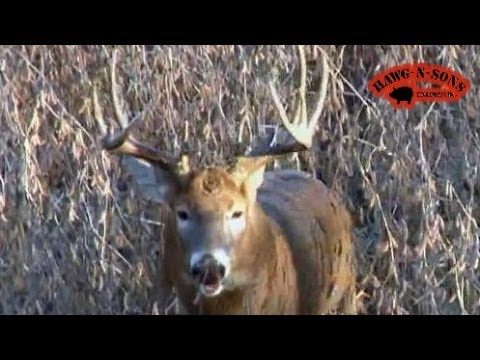 Hunting Whitetail Deer Grunting Buck Charges - Animal Attacks RUT November 9 - 14