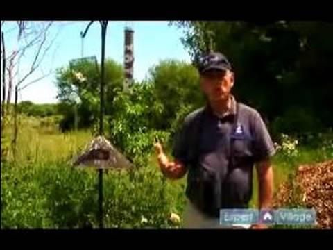Birdwatching for Beginners : Various Bird Feeders for Backyard Birding