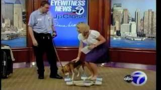 roscoe the bed bug dog demonstrating detection skills on channel 7