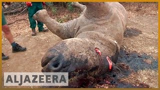 🇰🇪 Eight rhinos die in Kenya after relocation | Al Jazeera English - ALJAZEERAENGLISH