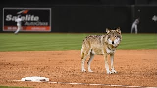 Should The MLB Ban Infield Shapeshifting? - THEONION