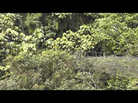 Dusun Eco Resort - Magazine cover