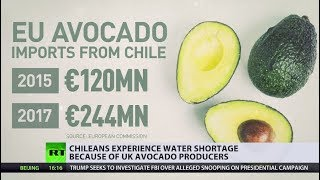 Chileans forced to drink dirt as UK avocado plantations suck up all the water - RUSSIATODAY
