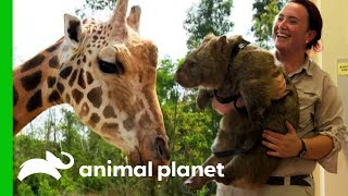 Meet The Mischievous Animals of Australia Zoo! - ANIMALPLANETTV