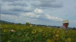 French vineyard aims for London IPO - CNN