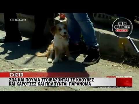 Παράνομο παζάρι στο Σχιστό - MEGA ΓΕΓΟΝΟΤΑ