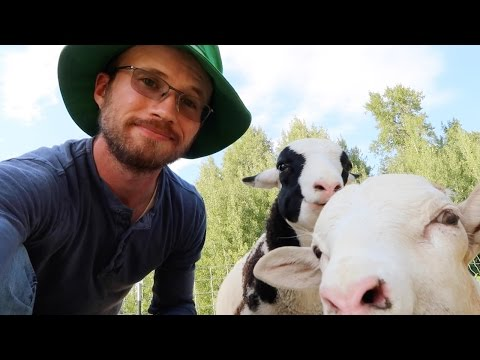 the Permaculture Shepherd