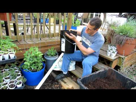 Simple 5 Gallon Watering Set-Ups for Container Tomatoes & Plants: Know Your Climate  & Respond 1of2