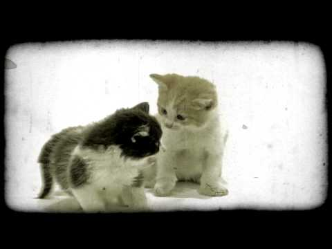 Two Kittens Play. Vintage Stylized Video ...
