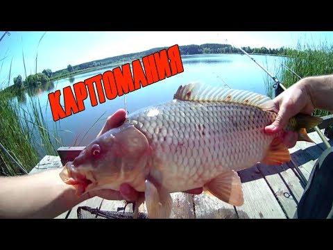 рыбалка на самого крупного карася видео