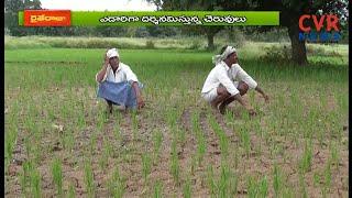 సంగారెడ్డి జిల్లాలో నీరులేక ఎండిపోతున్న వరి : Farmers Problems With Water Crisis in Narayankhed - CVRNEWSOFFICIAL