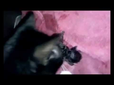 MY CAT GIVING BIRTH 07 04 2014  BY;D E X 1