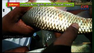 Farm Fields Turning into Fishponds in Srikakulam Dist | Huge Profits in Fish Farming | Raithe Raju - CVRNEWSOFFICIAL