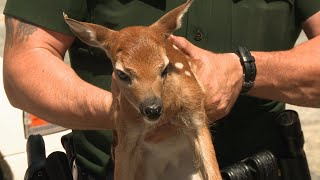 This Baby Deer Was Found All By Itself | North Woods Law - ANIMALPLANETTV