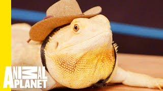 How To Take Care Of Your Reptile - ANIMALPLANETTV