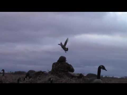 Big Spruce Outfitting Goose Hunting 2012 Video