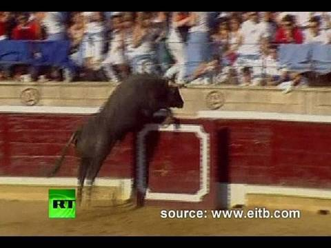 Bull Jumps Into Stands