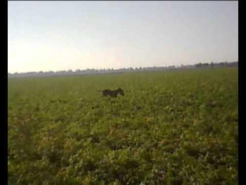 kinigi lagoy oygaria 2011