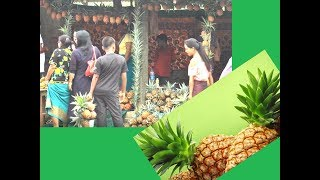 Imphal: 10-day pineapple festival to encourage farmers - TIMESOFINDIACHANNEL