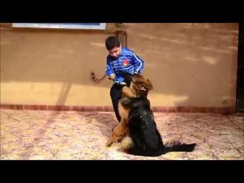 اصغر مدرب كلاب مازن