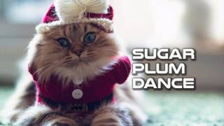 Royalty FreeBackground:Sugar Plum Dance