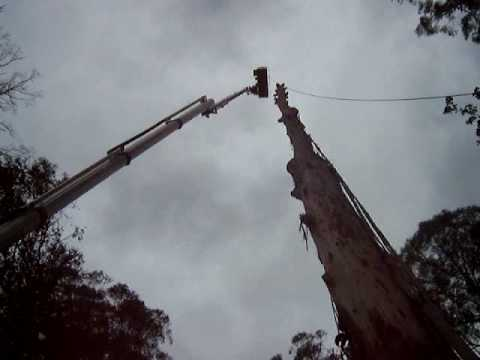 Cherry picker 60 Metre Bucket Truck serious big tree cutting and tree removal