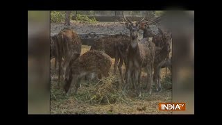 Heaters in Jamshedpur zoo to keep animal warms - INDIATV