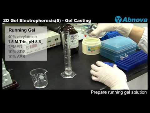 2D Gel Electrophoresis (5) Gel Casting