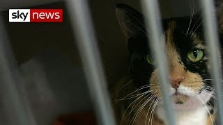 Calls to ban fur after Sky report - SKYNEWS