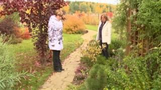 Декоративные идеи для сада. Ландшафтные хитрости. Выпуск 126
