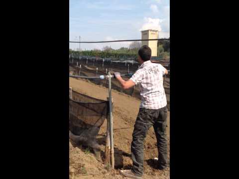 Allevamento di lumache- Irrigazione recinti LA LUMACA VT www.lalumacaweb.it