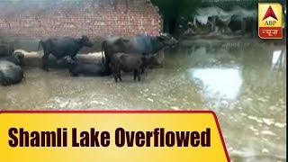 UP: Shamli lake overflows; water destroys farmers' produce - ABPNEWSTV