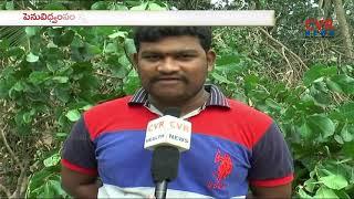 Cyclone Titli Aftermath: Farmers in Distress Over Crop Damage   CVR News - CVRNEWSOFFICIAL