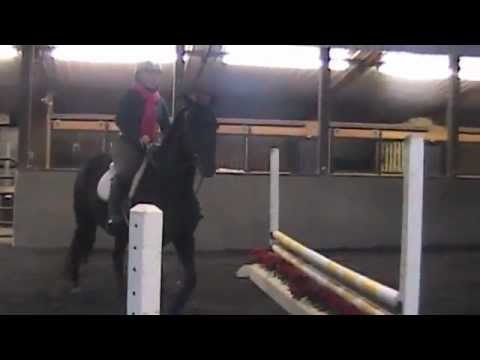 Jewels: Hanoverian Childrens Jumper Mare FOR SALE/LEASE