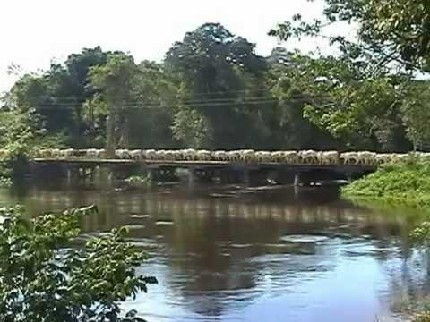 Pouso da Boiada Próximo ao Rio NHANDU