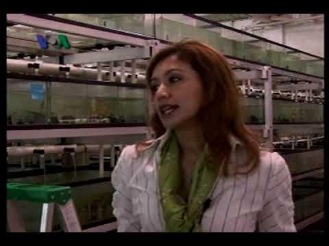Pengusaha Ikan Hias asal Indonesia - Dunia Kita